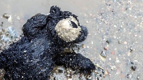 Teddybär ist überschwemmt von Wasser  (Foto: Herzenssache, Katharina Weiner)