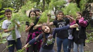 Schüler bei der Fenchelernte (Foto: Katharina Kühnel)