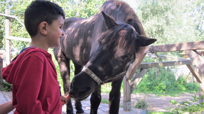 Hassan füttert Pferd (Foto: Herzenssache)